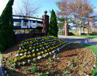 Pre – master's program Long Island University (LIU)